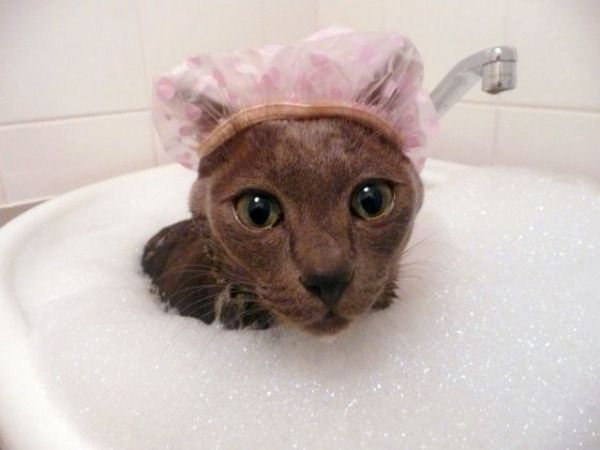 cat bubble bath