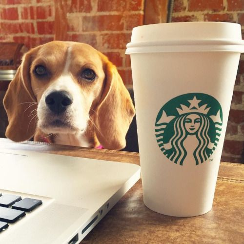 coffe & beagle