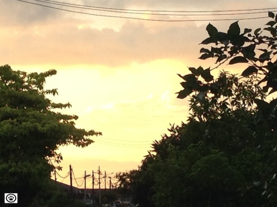 sunset from home