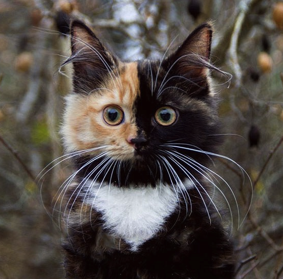 beautiful imperfect cat