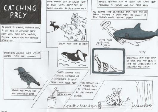 Catching prey - Del