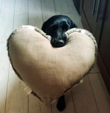 cute dog with love