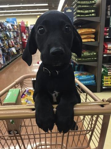 cute doggie on shopping cart
