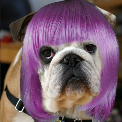 purplexed dog