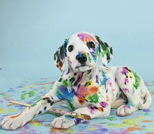 rainbow doggie