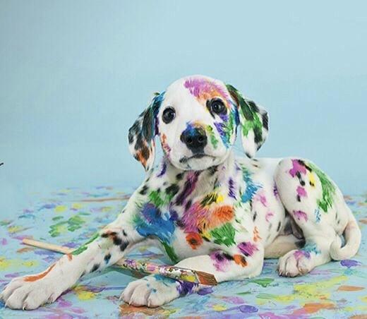 rainbow doggie