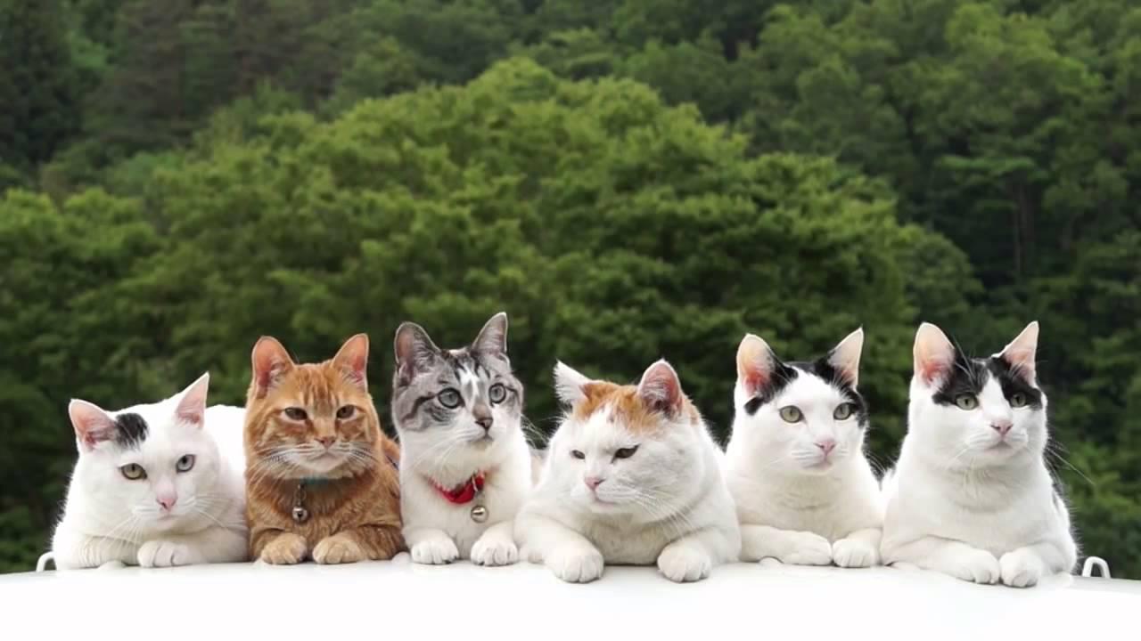 six cats