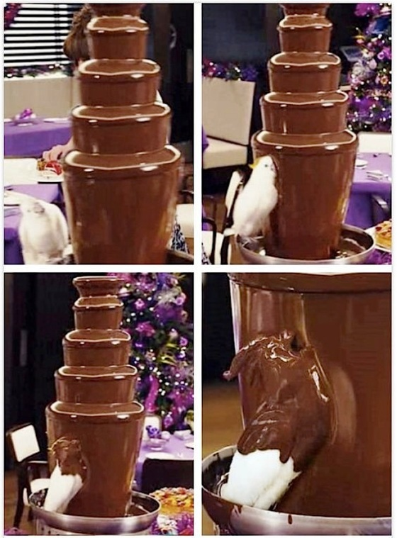 bird choc bath
