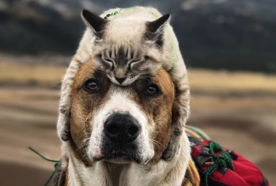 cat asleep on dog