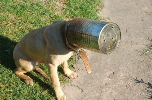 dog stuck in can