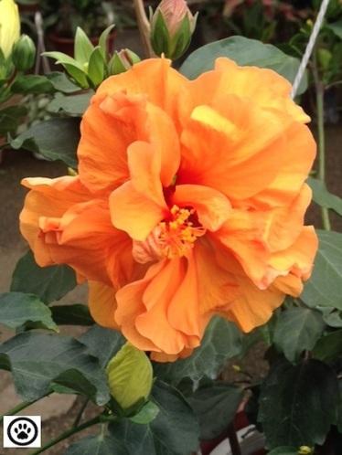 flower fr nursery