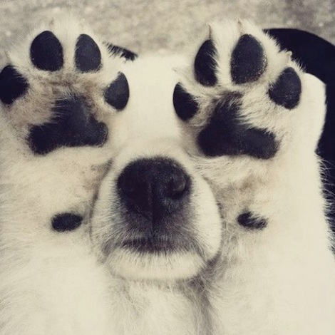 paws-up.jpg