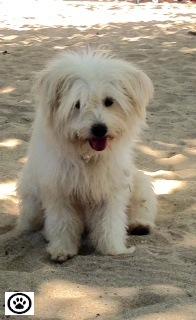 beach dog-1