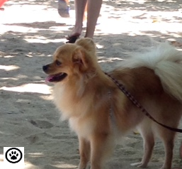 beach dog-2