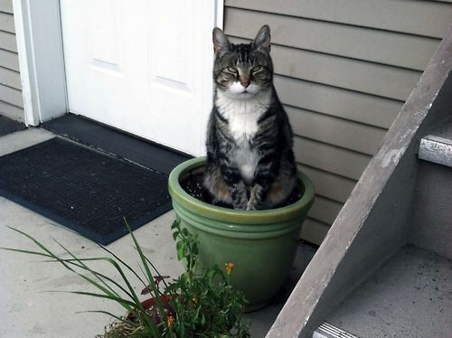 cute cat on flower pot