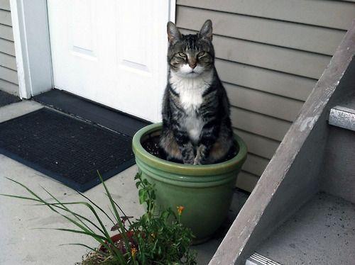 cute cat on flower pot