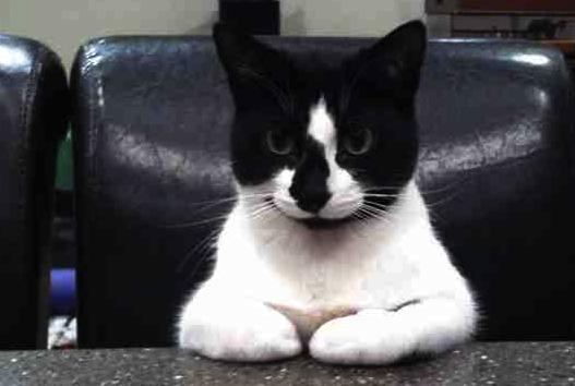 cute cat thinking