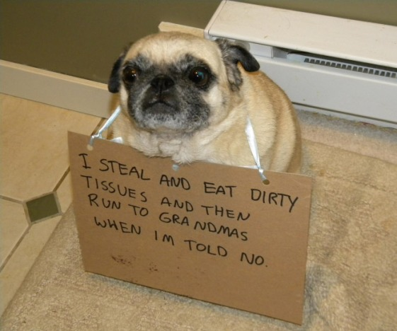 cute guilty dog