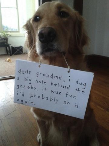 dog mischief