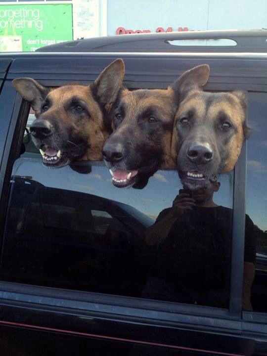 doggies in the window