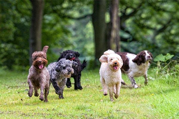 dogs running away