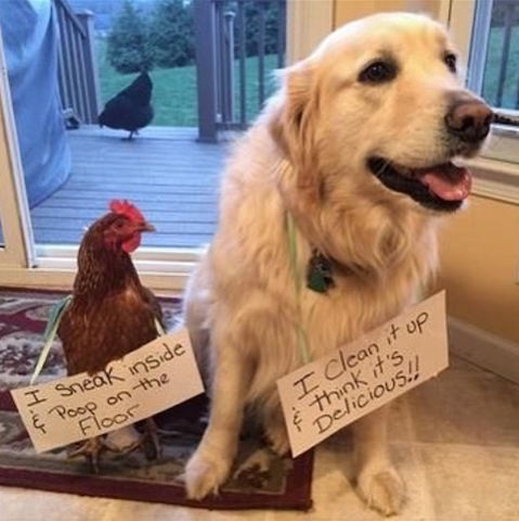 funny dog and rooster.png