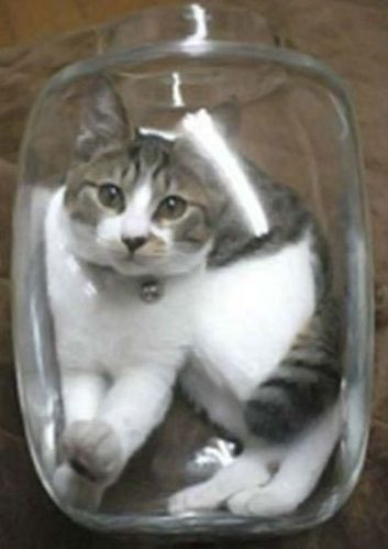 kittyinabottle