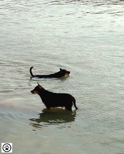 cute dogs taking a dip