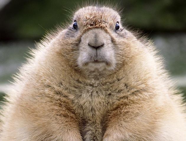 cute grumpy animal