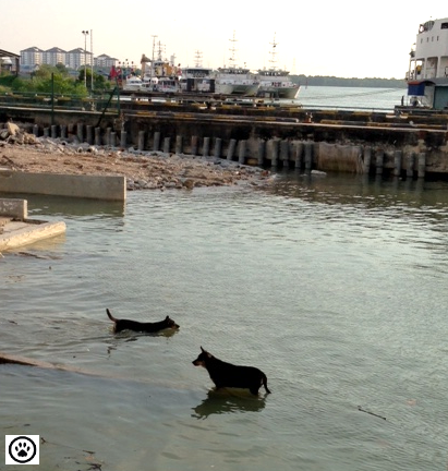 dogs taking a dip