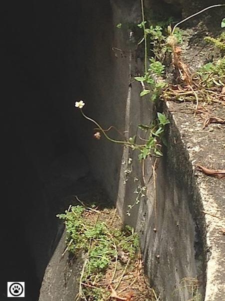 little flower of hope