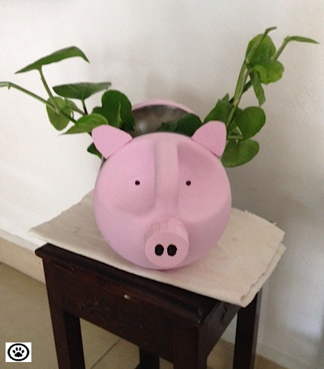 pig project