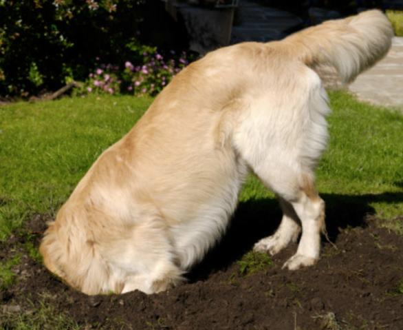 cute dog digging.png