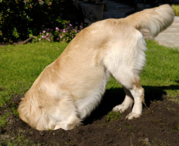 cute dog digging.png