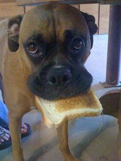 cute dog wit toast
