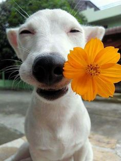 cute dog with flower.jpg