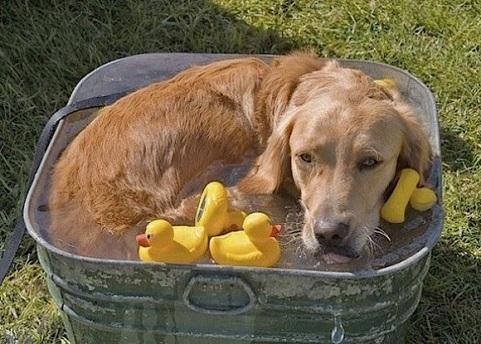 cute doggie wit rubber ducky
