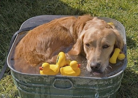 cute doggie wit rubber ducky