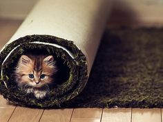 kitty in rolled carpet