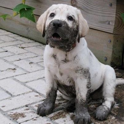 cute puppy dirty face