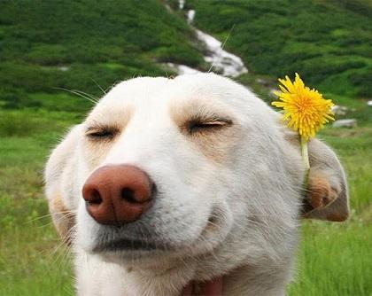 contented dog.jpg