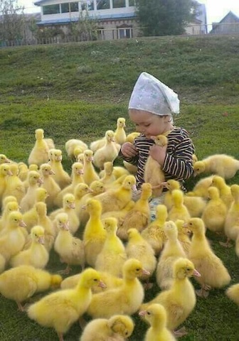 cute baby with duckies