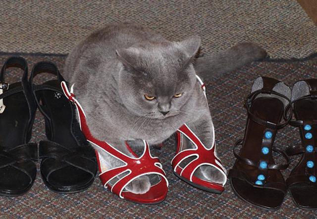 cat on heels