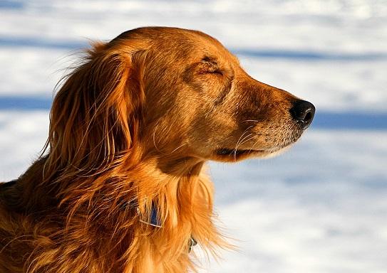 cute dog meditating