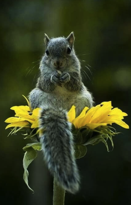 cute squirrel on seed dish