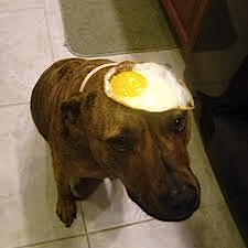 dog with egg