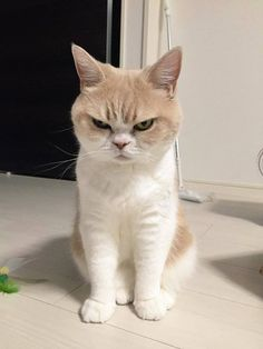 angry cat