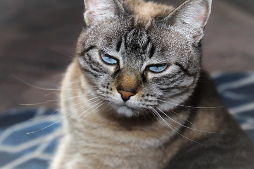 cat-grumpy