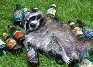 drunk racoon