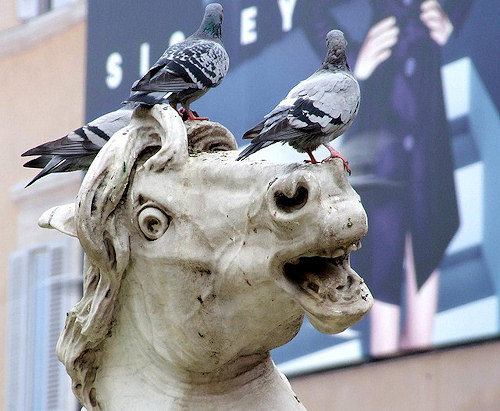 pigeons on statue